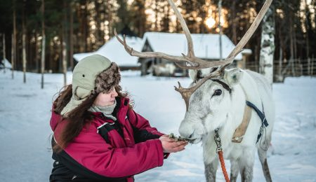 Visit our reindeer farm only 15 km from Rovaniemi city centre