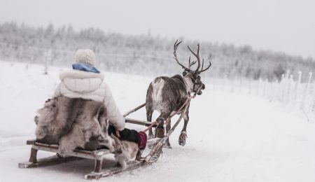 Reindeer rides & safaris in Lapland's unique nature