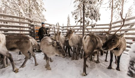 Read the history of our over 200 years old reindeer farm